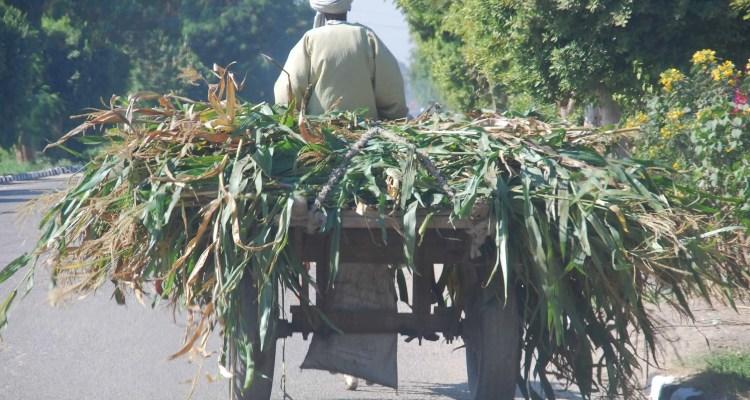 Verkehr in Aegypten