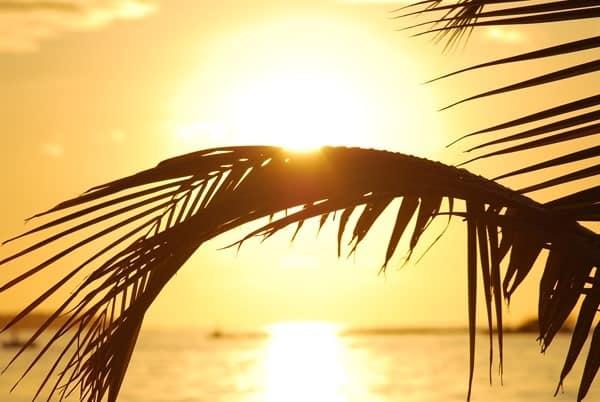 10_Malediven-Urlaub-Palme-im-Sonnenuntergang