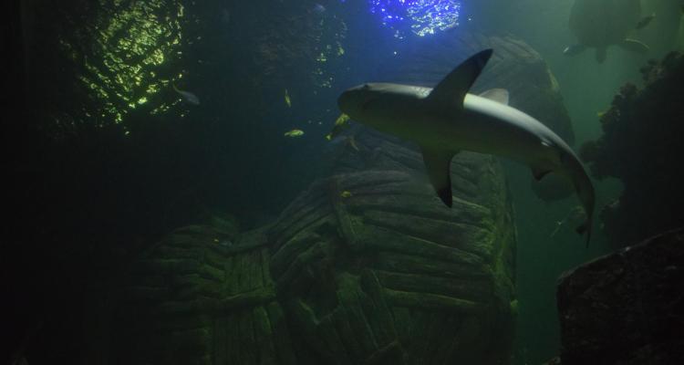 piratensommer sealife muenchen haifischbecken