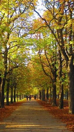 02_Prater-Hauptallee-Herbst-Wien-Oesterreich