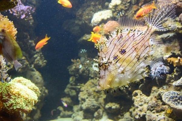 Meerwasser Salzwasser Aquarium SeaLife Muenchen
