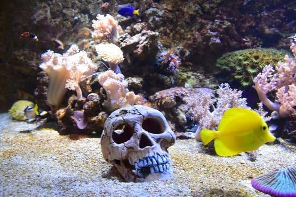 Meerwasser-Salzwasser-Aquarium-Piratensommer-SeaLife-Muenchen.jpg