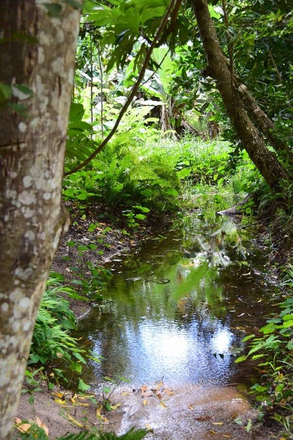 19_Urwald-Dschungel-Vallee-de-Mai-Praslin-Seychellen