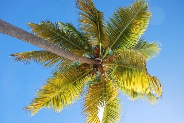 Flitterwochen wohin Karibik Hochzeitsreise günstig Strand Palme Virgin Gorda BVI