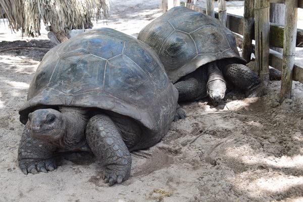 29_Riesenschildkroeten-Naturschutzgebiet-Marine-National-Park-Curieuse-Seychellen