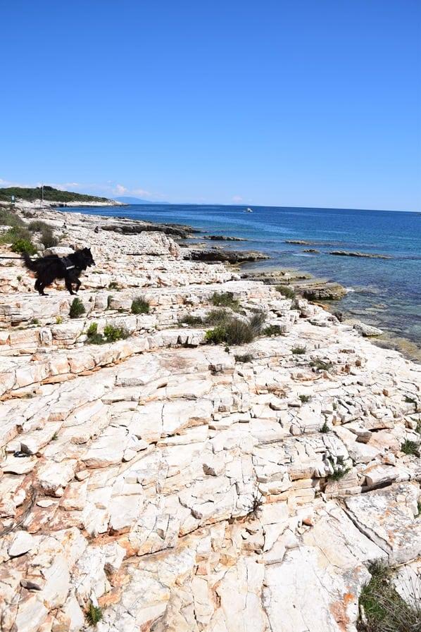 Naturpark Kap Kamenjak Wandern Gassi gehen Istrien Kroatien Urlaub mit Hund