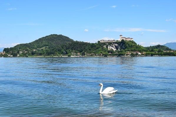 Arona Lago Maggiore Sehenswürdigkeiten Burg Angera Schwan Italien
