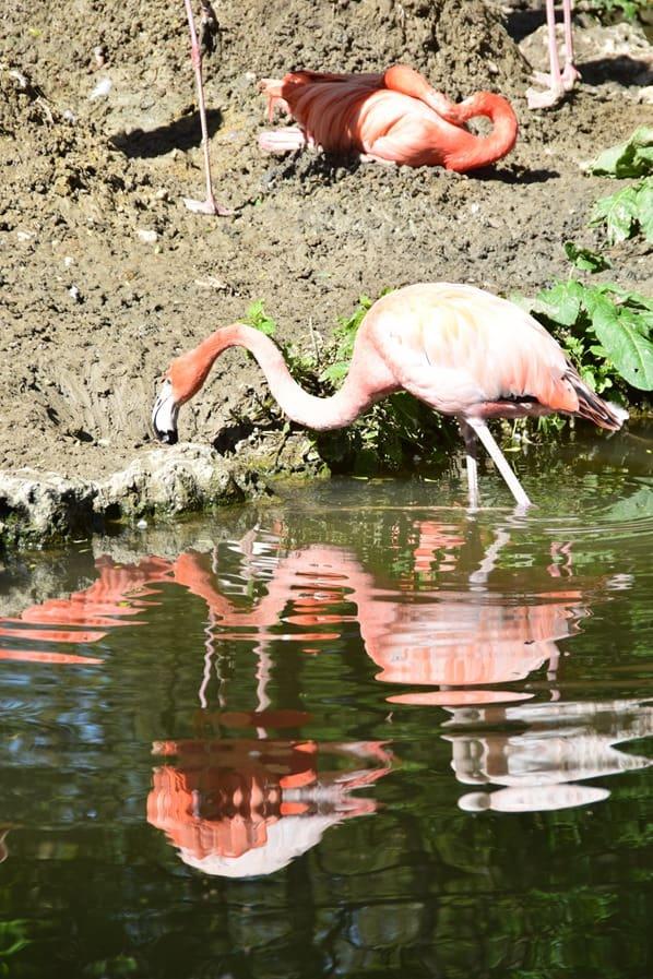 Pelikan Fotosafari Tierpark Hellabrunn Zoo Muenchen