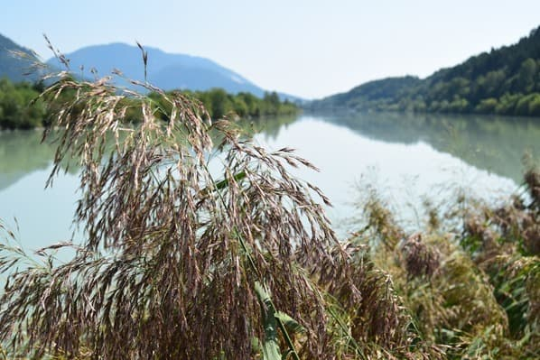 Eindrücke Drauradweg Drau Ufer Schilf Kärnten Österreich