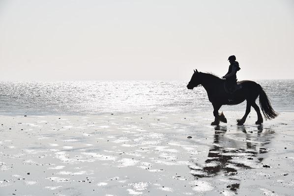 Nordsee Urlaub Pferd Reiten am Meer Strand St. Peter Ording Nordfriesland Schleswig-Holstein Deutschland