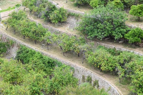 13 westkueste mallorca banyalbufar terrassen zitronen spanien
