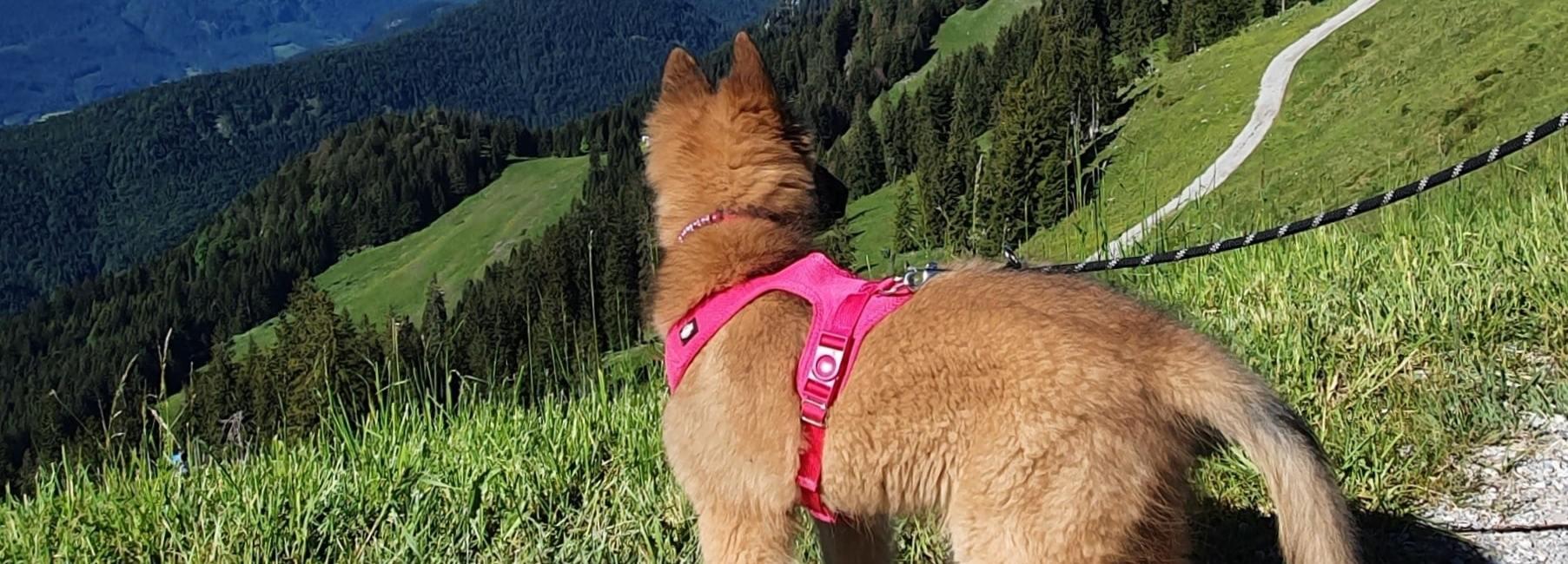ferien corona ausflugstipps kinder hund oberbayern