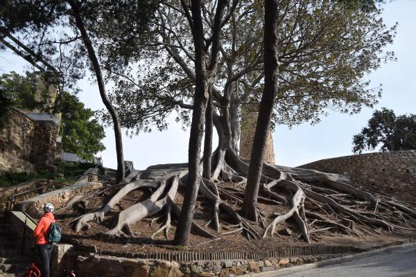 baum weg zum castillo de la concepcion cartagena murcia spanien aidamar familien kreuzfahrt