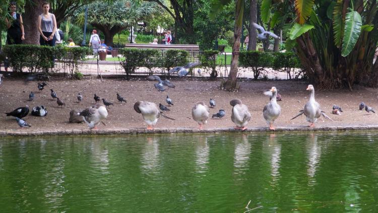 Städtereise Lissabon Sehenswürdigkeiten Park Jardim da Estrela Portugal