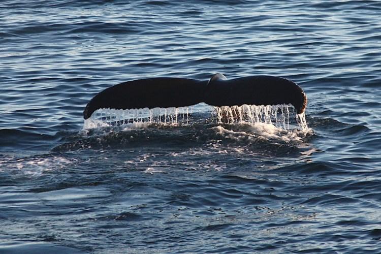 Hurtigruten Walflosse Nordsee Atlantik Norwegen