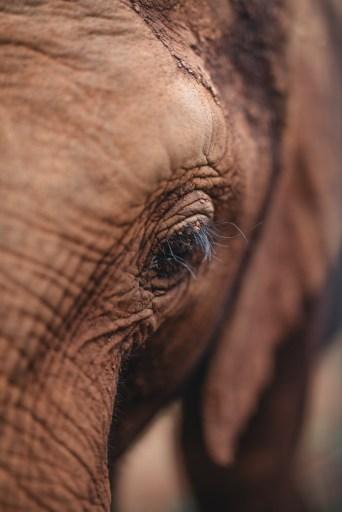 Baby Elephant at the Sheldrick Elephant Orphanage in Nairobi before Family Safari in Kenya