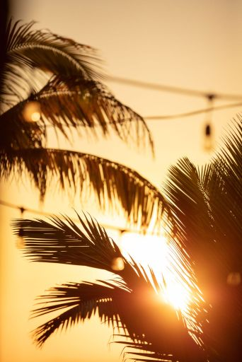Sunset on Belize island with palm trees and bistro lights in background