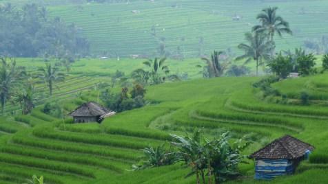 2011-03-18 Bali 096