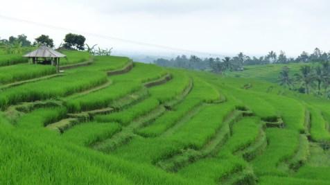 2011-03-18 Bali 117