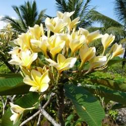2011-03-22 Bali 007