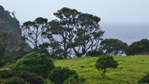 Coast near Tutukaka