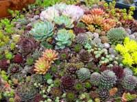 Succulent Gardens | ferrebeekeeper