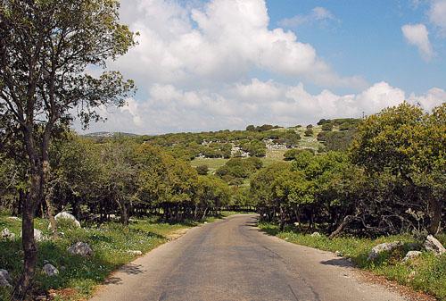 View of part of Mount Carmel near Muraka. Photo by Ferrell Jenkins.
