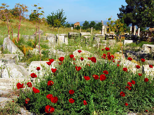 Flowers blooming among the ruins at Ephesus. Photo by Ferrell Jenkins.