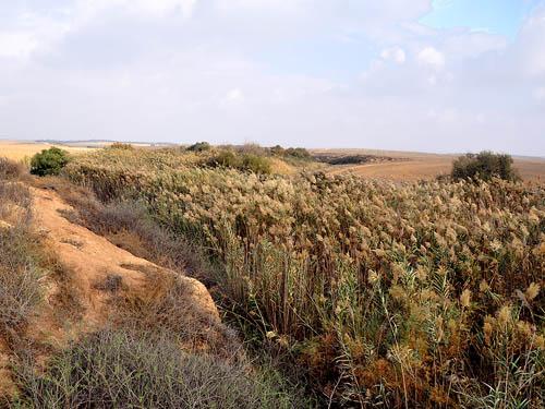 Wadi Gerar near Ziklag. Photo by Ferrell Jenkins 2009.