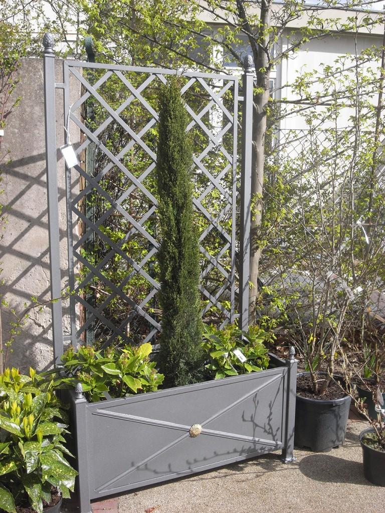 Pflanzengefe  Rankgitter  ferrumberlinde