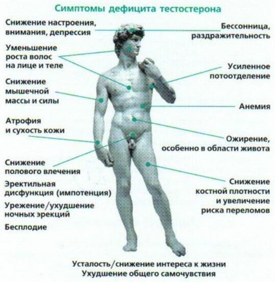 erecții spontane testosteron