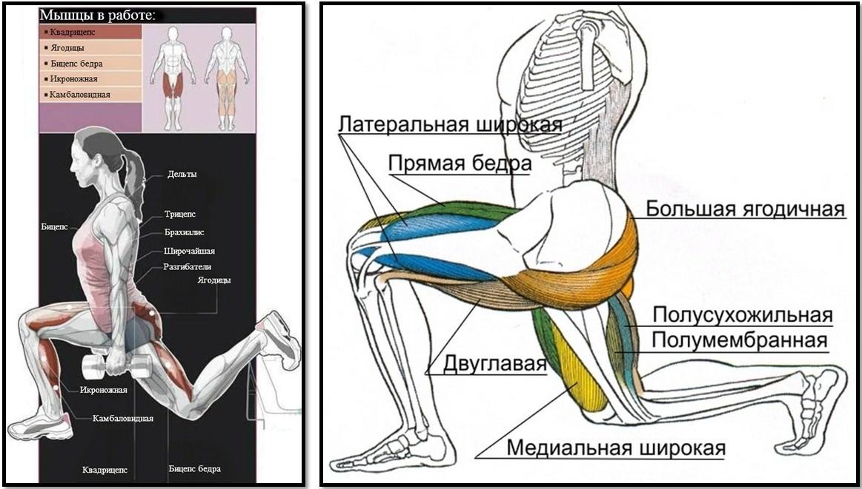 Болгарские приседания: техника выполнения сплит приседаний с гантелями