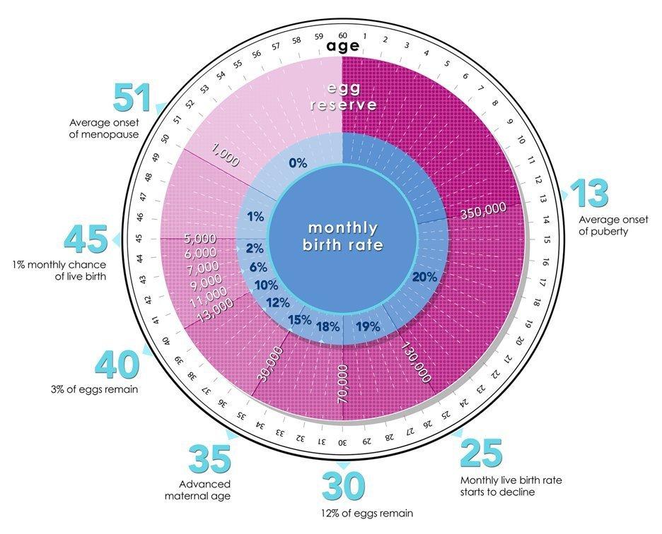 Fertility Biological Clock