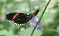 Mariposa (I)