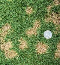 Fertilizer Plus