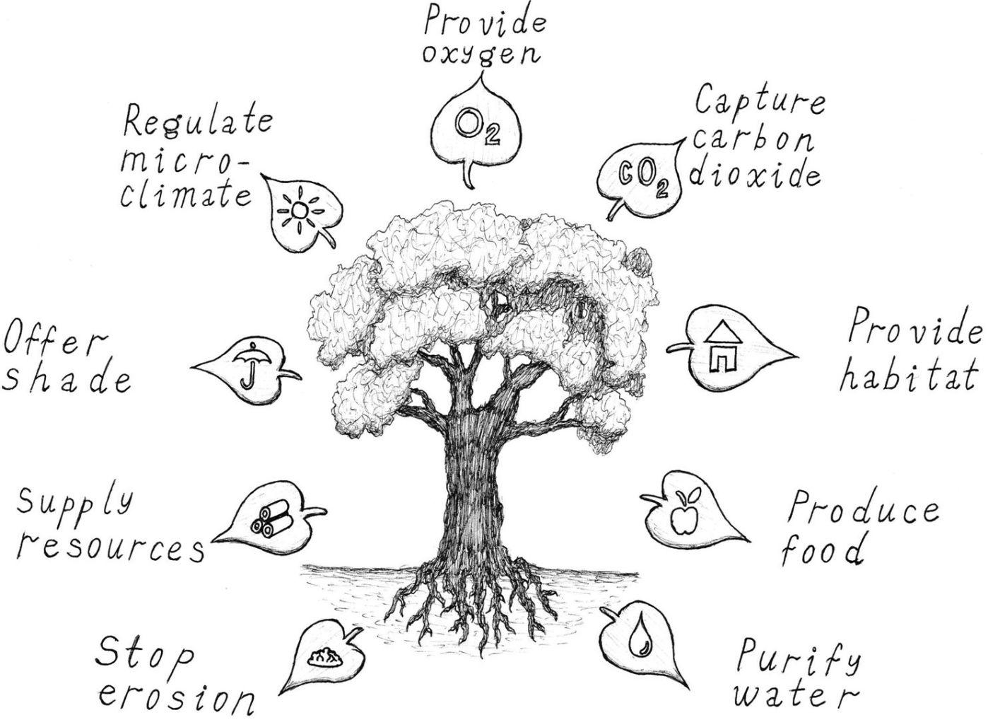 cartoon on net: Cartoon Forest Ecosystem Cartoon Forest