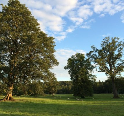 It sure is a lovely place for a festival and a pretty nice place to spend a Jul...