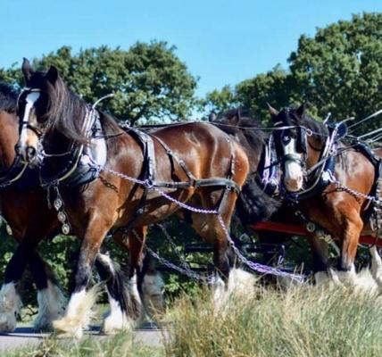 What could be more regal than a horse-drawn tram ride in the formal gardens at H...