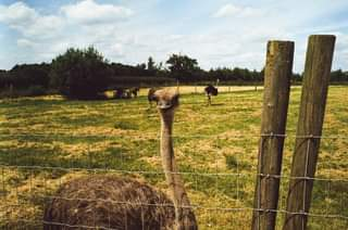 May be an image of emu and nature