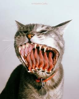 May be an image of cat