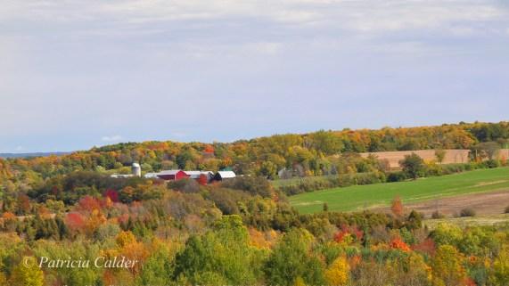 Blog Photo - FOTA Patricia Calder - Fields and Farm in Autumn