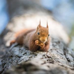 Une vie d'écureuil