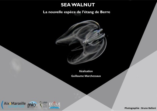 visuel-sea-walnut-g-marchessaux
