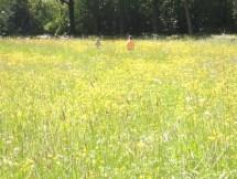 Struinen door het hoge gras.