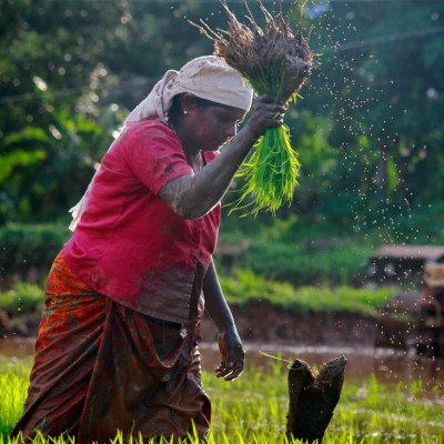 Creating Sustainable Food Systems through Fair Trade