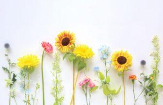勉強のモチベーション維持に役立つ花