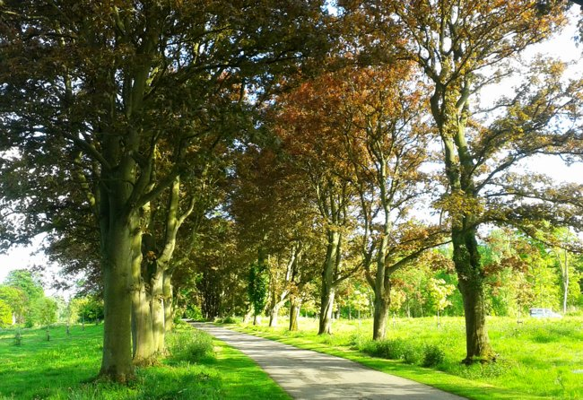 Trees in Hornsea, East Yorkshire