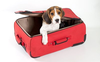 3 Simple and Effective Ways to Make Moving With Pets a Breeze