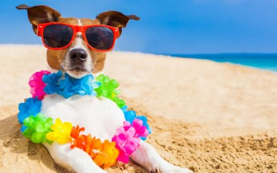 The Most Fun Things To Do With Pets in Wilmington NC