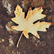 leaves16_08